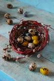 Uova di quaglie in nido Immagini Stock Libere da Diritti
