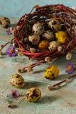 Uova di quaglie in nido Fotografia Stock Libera da Diritti