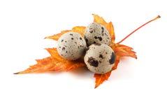 Uova di quaglie sul foglio arancione di caduta Fotografia Stock