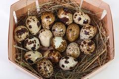 Uova di quaglie in un cestino Immagine Stock Libera da Diritti