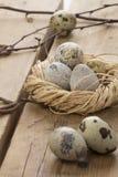 Uova di quaglie in un nido fotografia stock