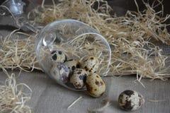 Uova di quaglie in un vetro Fotografie Stock