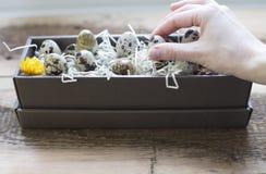 Uova di quaglie in una casella Immagini Stock Libere da Diritti