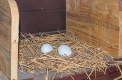 Uova di recente fatte del pollo Immagini Stock