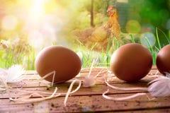 Uova di recente selezionate sulla tavola e sul campo di legno con i polli Fotografia Stock Libera da Diritti