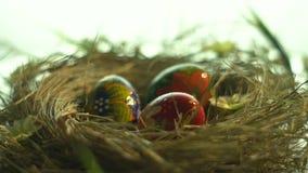 Uova dipinte in un nido su un fondo bianco