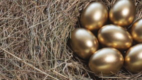 Uova dorate in uova dorate del nido in primo piano stock footage