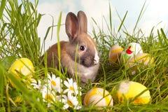 Uova e coniglietto di pasqua Fotografia Stock Libera da Diritti