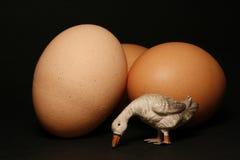 Uova e piccola oca Fotografie Stock