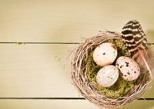 Uova e piuma macchiate in nido Immagini Stock
