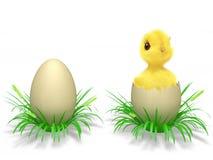 Uova e pollo Immagini Stock Libere da Diritti