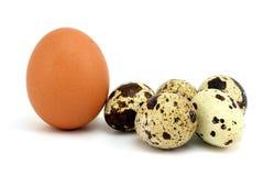 Uova e pollo di quaglie Fotografie Stock Libere da Diritti