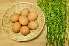 Uova ed acacia Pennat Immagine Stock