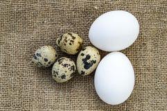 uova a forma di fiore del pollo ed uova di quaglia Le uova bianche del pollo e le uova di quaglia stanno parallelamente su un pav Fotografia Stock Libera da Diritti