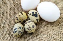 uova a forma di fiore del pollo ed uova di quaglia Le uova bianche del pollo e le uova di quaglia stanno parallelamente su un pav Fotografie Stock