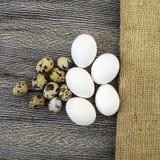 uova a forma di fiore del pollo ed uova di quaglia Le uova bianche del pollo e le uova di quaglia stanno parallelamente su un pav Immagine Stock