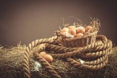 Uova fresche fotografia stock libera da diritti