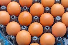 Uova fresche del pollo Immagine Stock Libera da Diritti