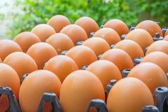Uova fresche del pollo Immagini Stock Libere da Diritti