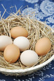 Uova fresche dell'azienda agricola Fotografie Stock Libere da Diritti