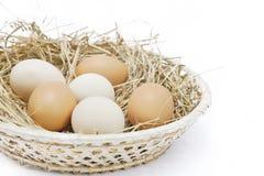 Uova fresche dell'azienda agricola Immagine Stock
