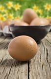 Uova fresche dell'azienda agricola Fotografie Stock