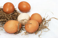Uova fresche dell'azienda agricola Fotografia Stock