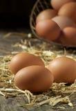 Uova fresche dell'azienda agricola organica Fotografie Stock Libere da Diritti