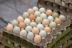 uova fresche di azienda agricola colorata Multi da vendere Fotografie Stock