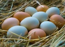 Uova fresche e naturali del pollo del villaggio, con delle coperture colorate multi, su un letto di fieno fotografia stock