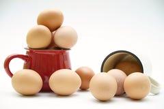 Uova fresche in tazze su fondo bianco Fotografia Stock