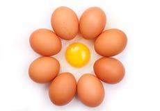 Uova isolate su priorità bassa bianca Immagini Stock Libere da Diritti