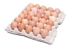 Uova isolate in un cartone Immagini Stock Libere da Diritti