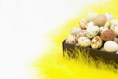 Uova macchiate in contenitore di regalo fotografie stock