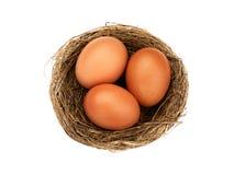 Uova marroni del nido tre di vista superiore intere isolate Fotografia Stock Libera da Diritti