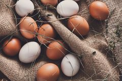 Uova marroni del pollo fresco su tela, fondo di agricoltura biologica Fotografia Stock Libera da Diritti