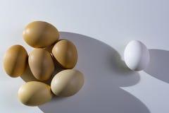 Uova marroni e bianche organiche crude sopra fondo bianco Da solo fra gli sconosciuti, il concetto di diseguaglianza ed il razzis Fotografie Stock Libere da Diritti