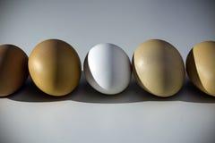 Uova marroni e bianche organiche crude sopra fondo bianco Da solo fra gli sconosciuti, il concetto di diseguaglianza ed il razzis Immagini Stock