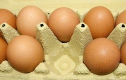 Uova marroni fresche in contenitore di cartone Fotografia Stock