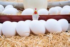 Uova naturali nella fine del canestro su Immagine Stock Libera da Diritti