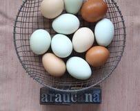 Uova naturalmente colorate delle galline di Araucana Immagini Stock