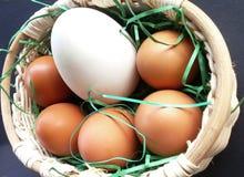 Uova nel canestro Fotografia Stock Libera da Diritti