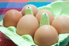 Uova nel contenitore di cartone Immagine Stock