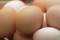 Uova nel guscio rurali Fotografia Stock