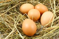 Uova nel nido Fotografia Stock