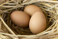Uova nel nido. Immagine Stock