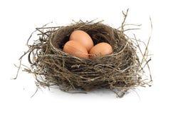 Uova in nido Immagine Stock