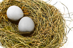 Uova in nido fotografia stock