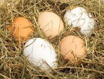 Uova in nido Fotografia Stock Libera da Diritti