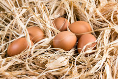 Uova organiche di marrone fresco del pollo su paglia Fotografia Stock Libera da Diritti